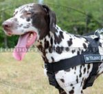 K9 Training Dog Harness for Dalmatian