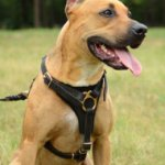 Leather Dog Harness for Pitbull Tracking Walking UK