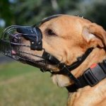 The Best Dog Basket Muzzle for Golden Retriever Muzzle Size