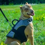 Outdoor Pitbull Dog Harness Vest for Winter with Support Handle