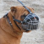 Shar Pei Muzzle Best Choice for Comfort and Safety of Your Dog!