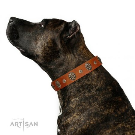 """Rockstar"" Natural Light Dog Collar FDT Artisan With Engraved Studs"