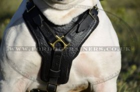 American Bulldog Harness UK | Padded Leather Harness NEW