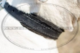 """Walk The Rounds"" Leather Dog Collar For American Bully With Soft Padding"