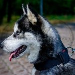 Nylon Quick Release Dog Collar for Husky