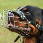 Rottweiler Muzzle UK Bestseller | Wire Dog Muzzle Reliable Fit