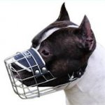 The Best Wire Basket Dog Muzzle for Staffy that Allows Drinking
