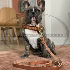2-6 Foot Leather Dog Leash with Brass Fittings
