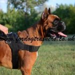Nylon Dog Harness for Boxer | Boxer Dog Harness with Handle