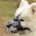Samoyed Muzzle for Dog Grooming, Biting and Chewing etc