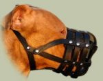 Leather Muzzle with Super Ventilation for Staffy, Bestseller!