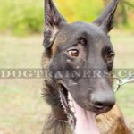 Wide Leather Dog Collars | Belgian Malinois Collars 1.5 in
