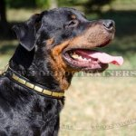 Rottweiler Collar for Dog Style, Brass Plated Design