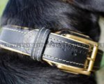 Padded Dog Collars | Swiss Mountain Dog Soft Leather Dog Collars