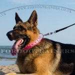 Pink German Shepherd Spiked Collar Real Leather