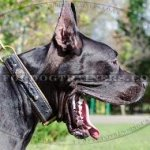 The Best Great Dane Collar Design, Luxury Dog Collar for Big Dog