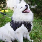 Super Comfortable Small Dog Harness for Japanese Spitz for Sale
