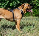 Padded Dog Harness for Cane Corso | Large Dog Harness UK