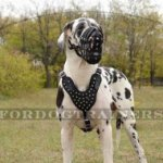 Great Dane Dog Muzzle with Super Ventilated Lightweight Design