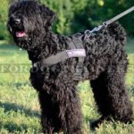 Black Russian Terrier Training Dog Harness