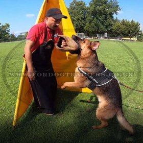 Dog Trainer's Apron Made of Leather for Dog Training
