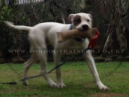 Strong Jute Bite Tug for Dog Training with 1 Handle