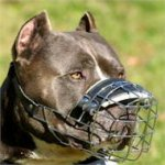 Wire Dog Muzzle UK Bestseller | Pitbull Muzzles UK