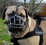 Boerboel Muzzle UK | Wire Dog Muzzle for Boerboel Mastiff