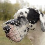 Large and Strong Great Dane Dog Muzzle for Drinking