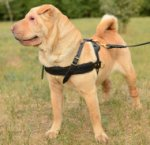 Shar Pei Harness for Dog Walking | Dog Harness for Sharpei Dogs