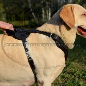 Strong Labrador Retriever Dog Harness