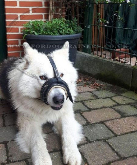 Leather Muzzle for Dogs to Stop Barking and for Daily Use