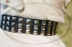 """Premium Finery"" Extra Durable Collar For American Bulldog With Luxurious Studs"