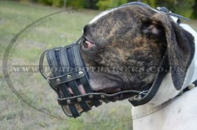 Muzzle for American Bulldog | Dog Leather Muzzle for Bulldog