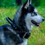 Husky Dog Collar with Control Handle