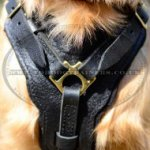 Dog Harness of the Best Design of Natural Leather for Retriever