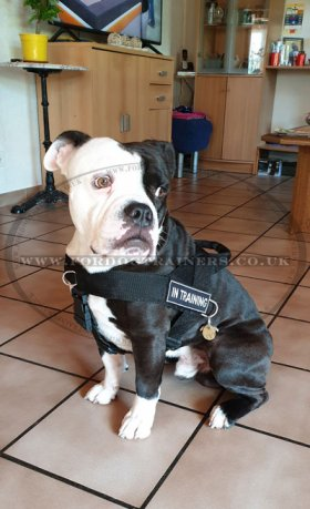 English Bulldog Harness Bestseller UK | Dog Harness for Bulldog