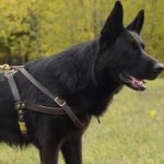 Leather German Shepherd Pulling Harness for Dogs Sport & Walking