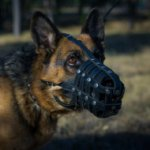 Leather German Shepherd Muzzle Size UK Bestseller