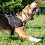 Small Dog Harness for Beagle Walking | Dog Harness with Handle