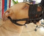 Daily Super Air-Flow Dog Muzzle for Pitbull | Pitbull Muzzle UK