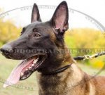Round Leather Collar | Soft Leather Dog Collar for Malinois, NEW