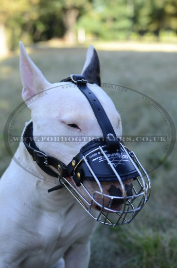 English Bull Terrier Muzzle UK Bestseller for Individual Breed