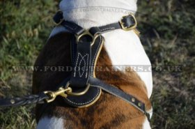 American Bulldog Harness with Studs | Luxury Dog Harness Padded