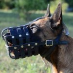 Leather Dog Muzzle for Belgian Shepherd Dog
