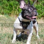 French Bull Dog Harness for Sale | Small Dog Harness UK