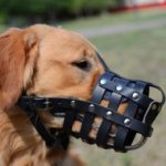 Golden Retriever Muzzle | Muzzle for Golden Retriever Daily Use