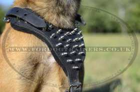 Belgian Malinois Dog Harness with Spikes