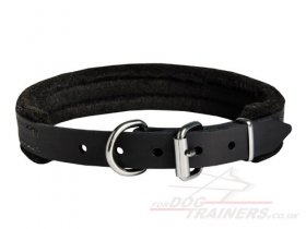 Felt Padded Leather Dog Collar for Shar Pei