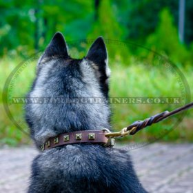 Siberian Husky Dog Collar with Belt Buckle Closure and Square Adornments
